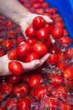 Pomodori della lavata della donna Immagine Stock