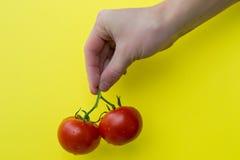 Pomodori della tenuta due della mano dell'uomo Fotografia Stock Libera da Diritti