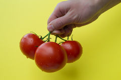 Pomodori della tenuta tre della mano dell'uomo, orizzontale Fotografia Stock