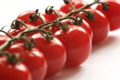 Pomodori della vite fotografia stock