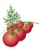 Pomodori della vite Illustrazione Vettoriale