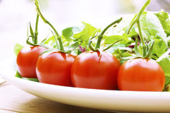 Pomodori della vite su una fine della zolla di insalata in su Immagini Stock