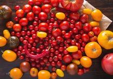 Pomodori delle varietà differenti Fondo variopinto dei pomodori dei pomodori Concetto sano dell'alimento dei pomodori freschi Fotografie Stock Libere da Diritti