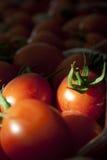 Pomodori dello sherry Fotografia Stock Libera da Diritti