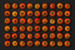 Pomodori di ciliegia immagine stock