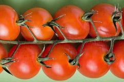 Pomodori di ciliegia allegati sulle viti verdi Immagine Stock Libera da Diritti