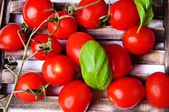 Pomodori di ciliegia con basilico Fotografia Stock