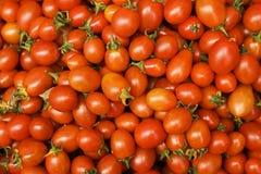 Pomodori di ciliegia freschi Immagini Stock Libere da Diritti
