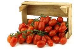 Pomodori di ciliegia italiani freschi sulla vite Immagini Stock