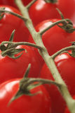 Pomodori di ciliegia a macroistruzione immagine stock