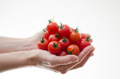 Pomodori di ciliegia in mani di Womans Fotografia Stock
