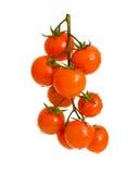 Pomodori di ciliegia maturi. Immagine Stock