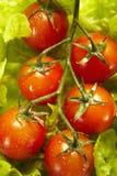 Pomodori di ciliegia nella filiale Immagini Stock