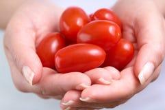 Pomodori di ciliegia nelle mani immagine stock libera da diritti