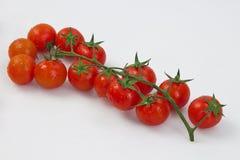 Pomodori di ciliegia organici Fotografia Stock