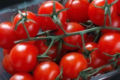 Pomodori di ciliegia organici Immagine Stock