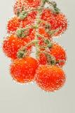 Pomodori di ciliegia rossi maturi fotografia stock libera da diritti