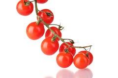 Pomodori di ciliegia su una filiale Immagine Stock