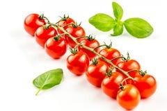 Pomodori di ciliegia sulla vite Fotografia Stock Libera da Diritti