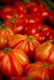 Pomodori di cimelio Fotografie Stock