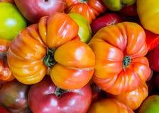 Pomodori di cimelio su esposizione 1 Fotografia Stock