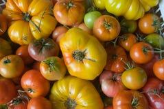 Pomodori di eredità Immagine Stock