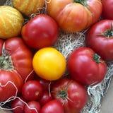 Pomodori di estate Fotografia Stock