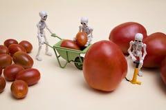 Pomodori di pompaggio Immagine Stock Libera da Diritti