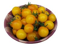 Pomodori di prugna gialli Immagine Stock Libera da Diritti