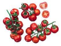 Pomodori di Regina sulla vite Fotografia Stock