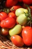 Pomodori di Roma nel cestino di s Fotografia Stock