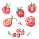 Pomodori di rosso dell'acquerello Immagine Stock Libera da Diritti