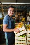 Pomodori di trasporto dell'agricoltore felice in una serra Fotografia Stock Libera da Diritti