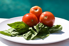 Pomodori e basilico fresco Immagine Stock Libera da Diritti