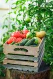 Pomodori e cetrioli freschi in scatola di legno fotografia stock