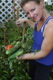 Pomodori e cetrioli organici crescenti Immagine Stock
