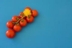 Pomodori e denti di leone Fotografie Stock Libere da Diritti