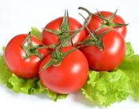 Pomodori e foglia della lattuga su fondo bianco fotografia stock libera da diritti