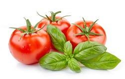 Pomodori e foglia freschi del basilico Fotografie Stock