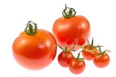 Pomodori e pomodori di ciliegia Fotografia Stock