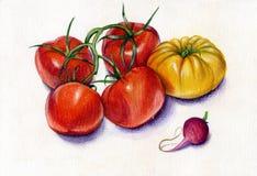 Pomodori e ravanello royalty illustrazione gratis