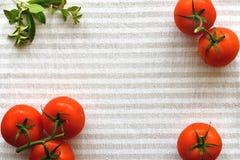 Pomodori ed origano rossi sulla superficie a strisce luminosa del tessuto immagini stock libere da diritti