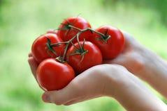 Pomodori freschi Fotografia Stock