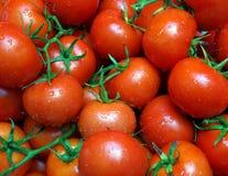 Pomodori freschi Fotografie Stock Libere da Diritti