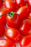 Pomodori freschi fotografia stock libera da diritti