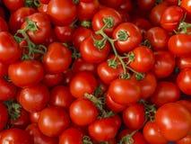 Pomodori freschi al servizio Fotografia Stock Libera da Diritti