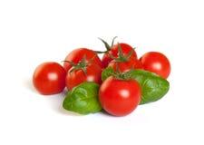 Pomodori freschi con basilico Fotografie Stock