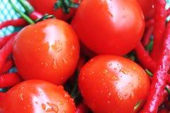 Pomodori freschi con le goccioline di acqua immagine stock libera da diritti