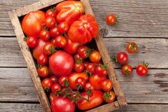 Pomodori freschi del giardino Immagine Stock