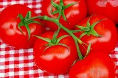 Pomodori freschi dell'azienda agricola fotografia stock libera da diritti